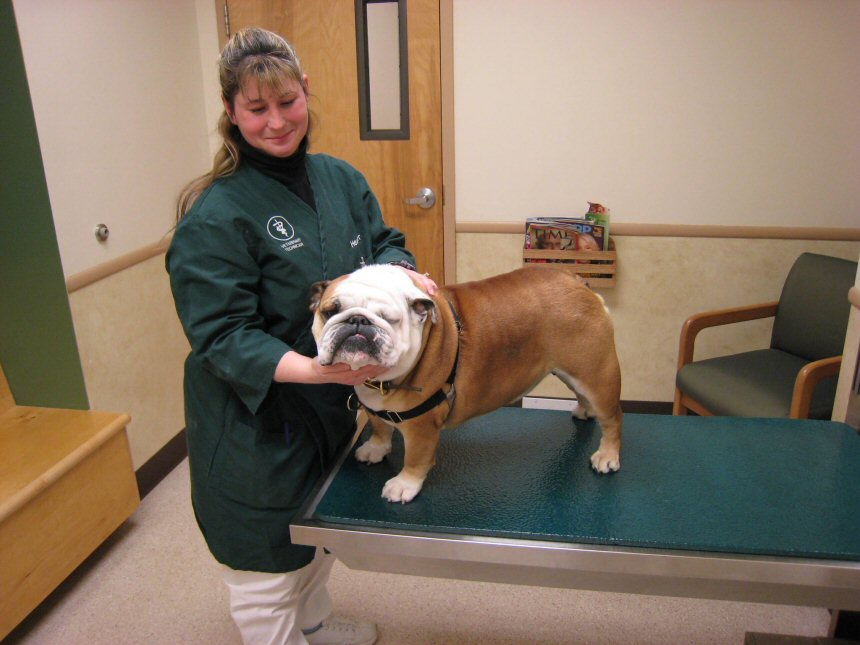 Litchfield Veterinary Hospital - Litchfield, CT - Exam room -Heather