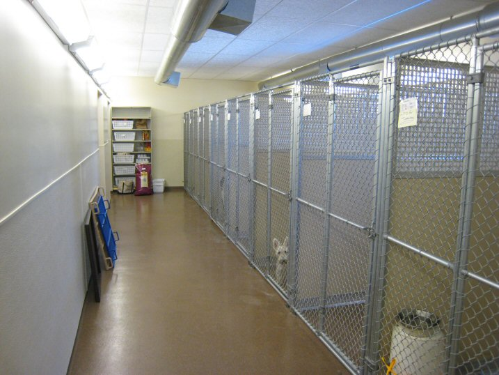 Litchfield Veterinary Hospital - Litchfield, CT - Large Dog Kennel