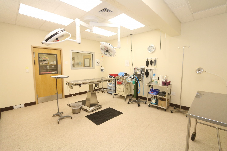 Litchfield Veterinary Hospital - Litchfield, CT - Surgical Suite