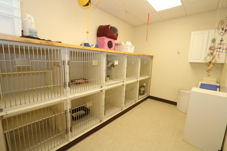 Litchfield Veterinary Hospital - Litchfield, CT - Cat Ward